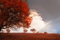 Дерево в поле Стоковое Фото
