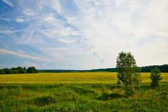 Дерево в поле стоковое фото rf