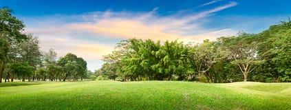 Дерево в поле для гольфа Стоковые Фото