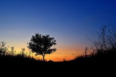 Дерево в поле Стоковая Фотография