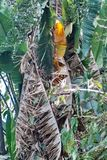 Дерево в Претории, Южной Африке Стоковая Фотография RF