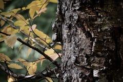 Дерево в предпосылке детали падения Стоковое Изображение RF