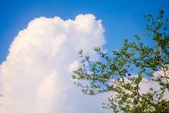 Дерево в предпосылке неба Стоковое Фото
