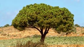 Дерево в природе стоковое изображение rf