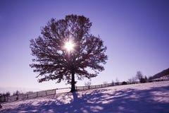 Дерево в природе Стоковые Фотографии RF