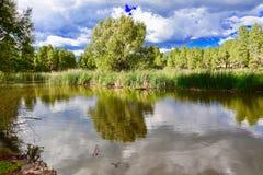 Дерево в пруде Стоковые Изображения