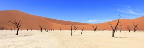 Дерево в пустыне на Sossusvlei Намибии Стоковая Фотография RF