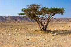 Дерево в пустыне Стоковые Фотографии RF