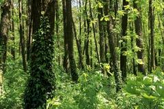 Дерево в пуще Стоковые Фото
