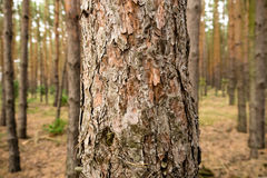 Дерево в пуще Стоковые Изображения RF