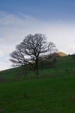 Дерево в районе Великобритании озера стоковая фотография rf