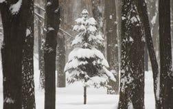 Дерево в древесинах в середине снега в зиме в вьюге снега Стоковые Изображения RF