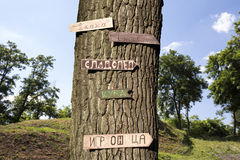 Дерево в древесинах с знаками на ем Стоковые Изображения RF