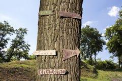 Дерево в древесинах с знаками на ем Стоковая Фотография