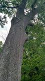 Дерево в древесинах стоковые изображения