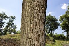 Дерево в древесинах Стоковая Фотография