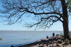 Дерево в речном береге Стоковая Фотография