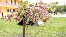 Дерево в саде - современный детский сад пасхи общественного здания - preschool сток-видео