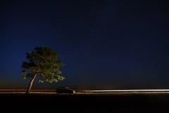 Дерево в свете фар автомобиля на предпосылке s Стоковое фото RF