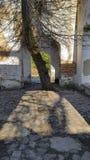 Дерево в середине террасы старого здания стоковое изображение rf