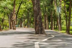 Дерево в середине дороги стоковое фото