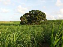 Дерево в сельской местности Стоковое Изображение RF