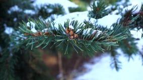 Дерево в снеге, зиме акции видеоматериалы