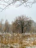 Дерево в снеге, траве которая вокруг высушенный вверх Стоковое Изображение RF