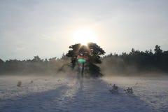 Дерево в снеге Стоковое фото RF