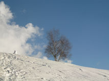 Дерево в снежном ландшафте зимы стоковые изображения