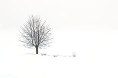 Дерево в снежном поле Стоковое Изображение RF