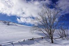 Дерево в снежных горах стоковые изображения
