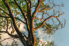 Дерево в солнечности Стоковое Изображение RF