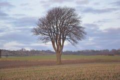Дерево в солнце Стоковое Изображение