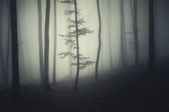 Дерево в темном страшном лесе на ноче хеллоуина Стоковое Фото