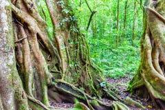Дерево в тропическом тропическом лесе Стоковое Фото