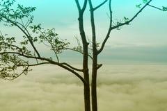 Дерево в тумане на горе Стоковое Изображение RF