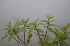 Дерево в тумане, дождь леса Стоковое Изображение