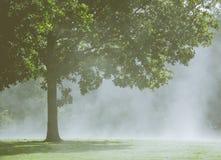 Дерево в тумане утра Стоковые Фото