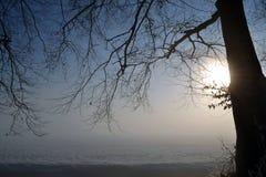 Дерево в тумане. Стоковая Фотография