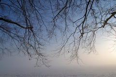 Дерево в тумане. Стоковые Фотографии RF