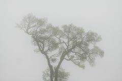 Дерево в тумане Стоковые Изображения