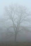 Дерево в тумане Стоковая Фотография