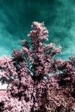 Дерево в ультракрасном стоковые изображения