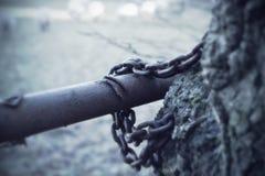 Дерево в цепях Стоковое Изображение