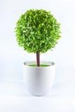 Дерево в чашке Стоковое Фото