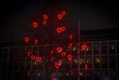 Дерево влюбленности стоковые изображения rf
