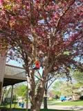Дерево в Burnsville Минесоте стоковые изображения
