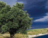 Дерево в Tarazona Испании Стоковые Фото