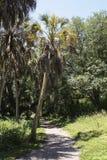 Дерево гавани безопасности Стоковые Изображения